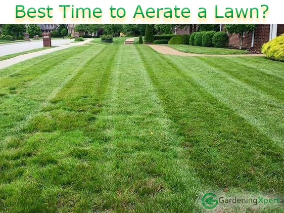 Why How When To Aerate Lawn Gardeningxpert